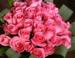 pink-roses-big-bouquet-picture